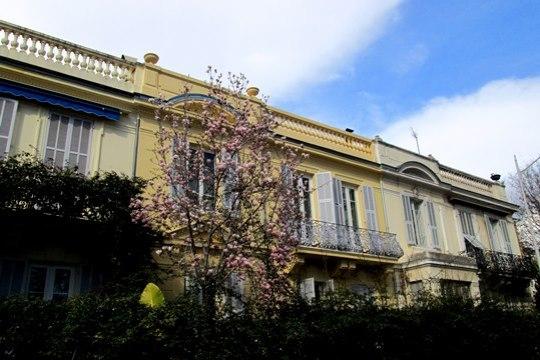 À Nice, les magnolias sont en fleurs.