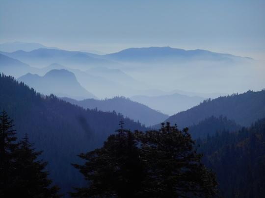 Brouillard dans le Geant Sequoia National Monument.