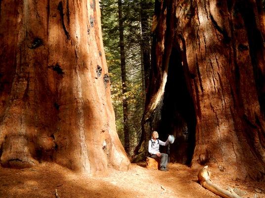 Lise parmi les géants du parc Sequoia.