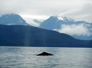 Une baleine en Alaska.