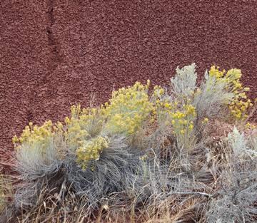 Dans les Painted Hills de l'Oregon.
