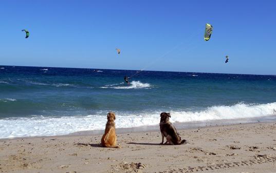 Deux chiens suivent de près les prouesses de leur maître.