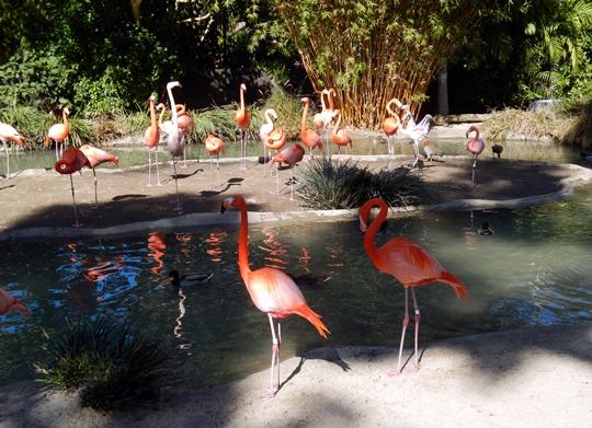 Le zoo de San Diego passe pour un des plus beaux du monde.