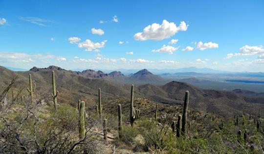 En route vers le mont Amole, dans le Parc national des saguaros, on a une très belle vue sur la vallée.