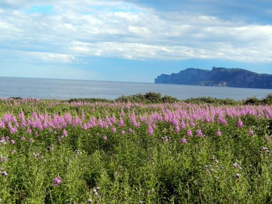 L'extrémité de la péninsule de Forillon.