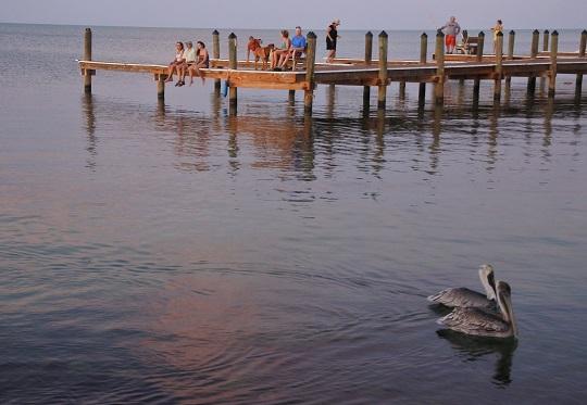 keys - pelicans